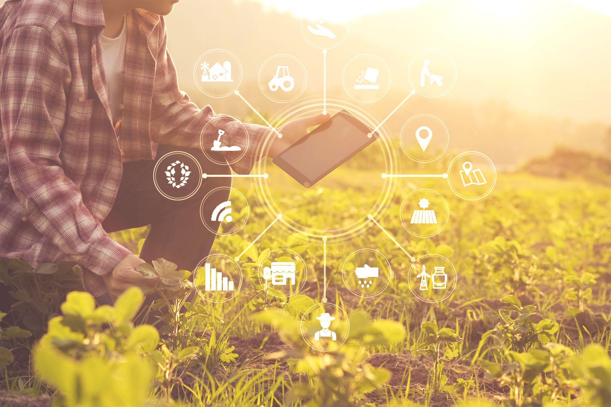 Le plan de relance vise à accélérer la transformation technologique et écologique des acteurs de l'agroalimentaire